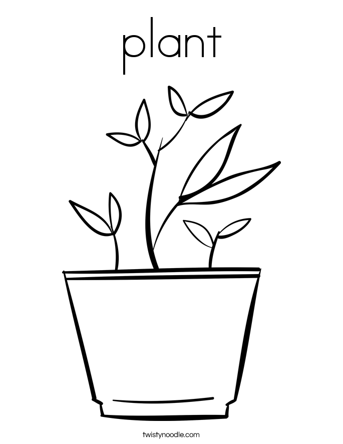 plant Coloring Page