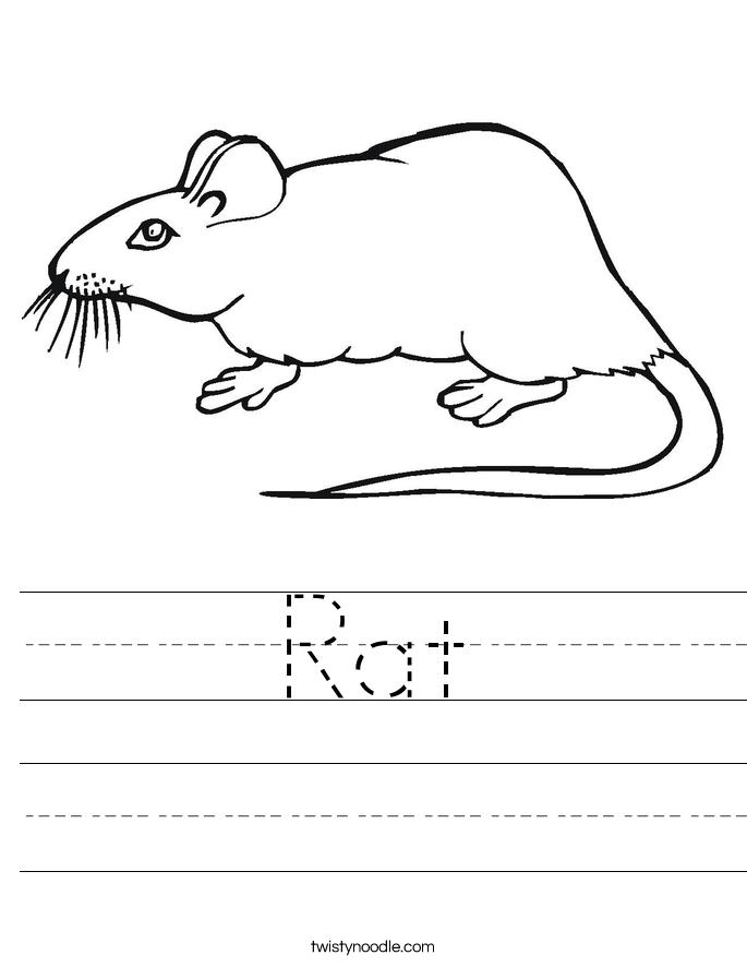 Rat Worksheet