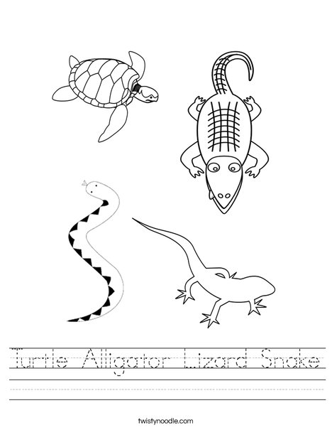 Turtle Alligator Lizard Snake Worksheet Twisty Noodle