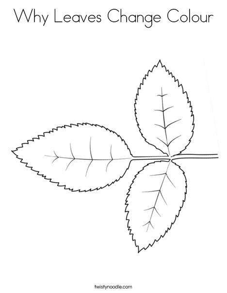 Why Leaves Change Colour Coloring Page Twisty Noodle