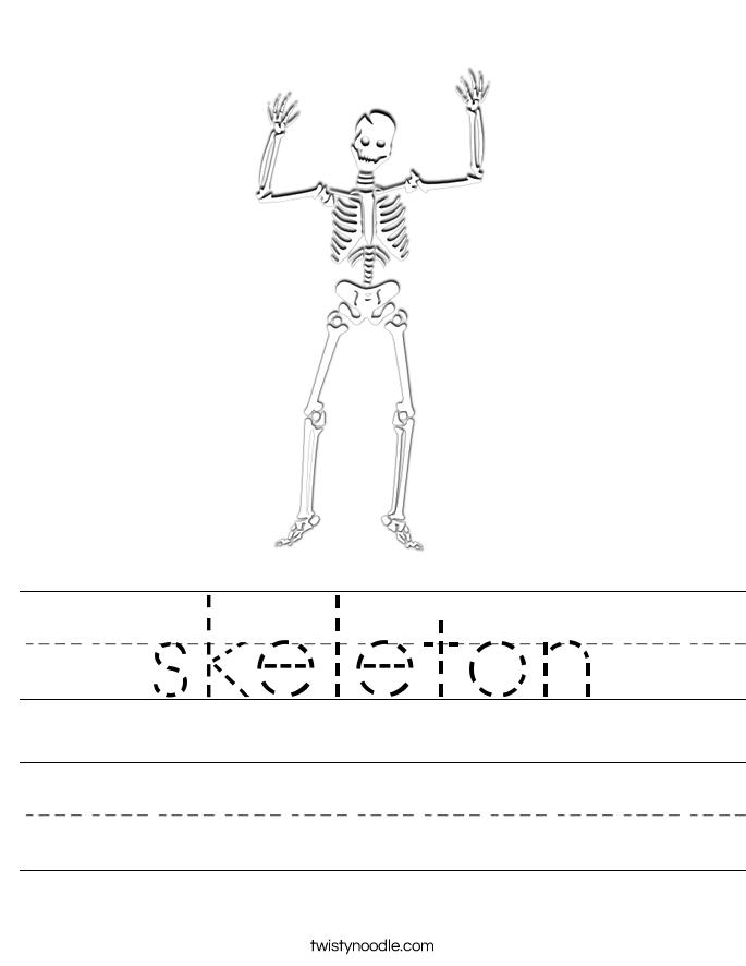 Skeletal System Quiz   Worksheet   Education.com
