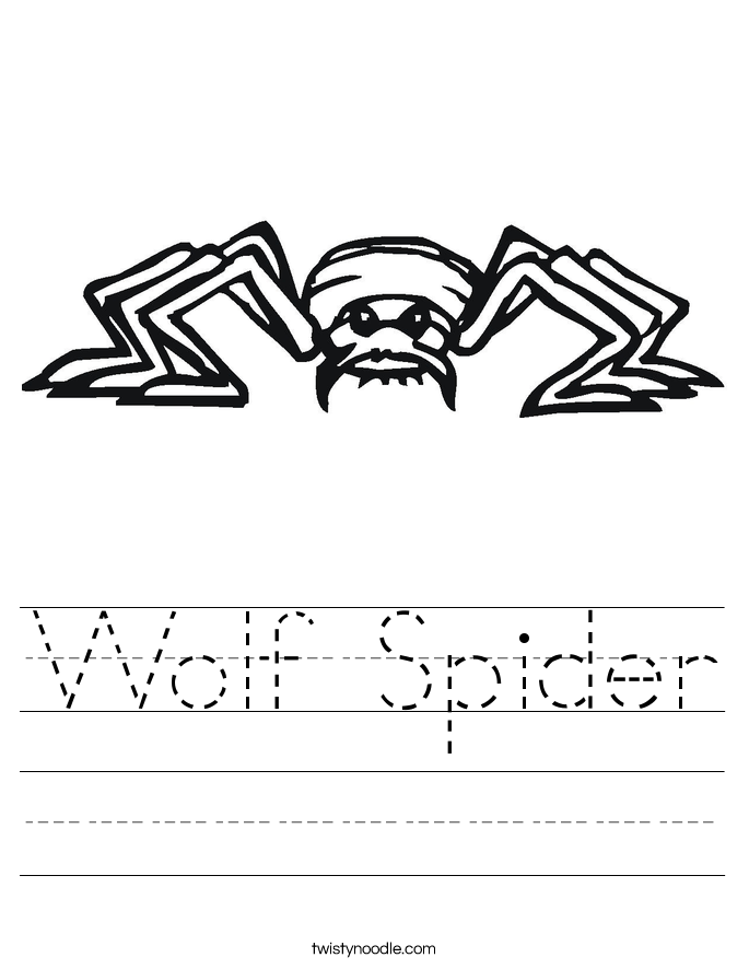 Wolf Spider Worksheet