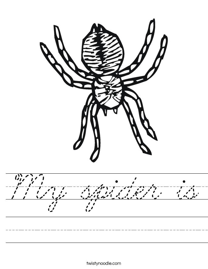 My spider is Worksheet