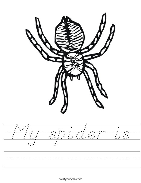 Spider Worksheet