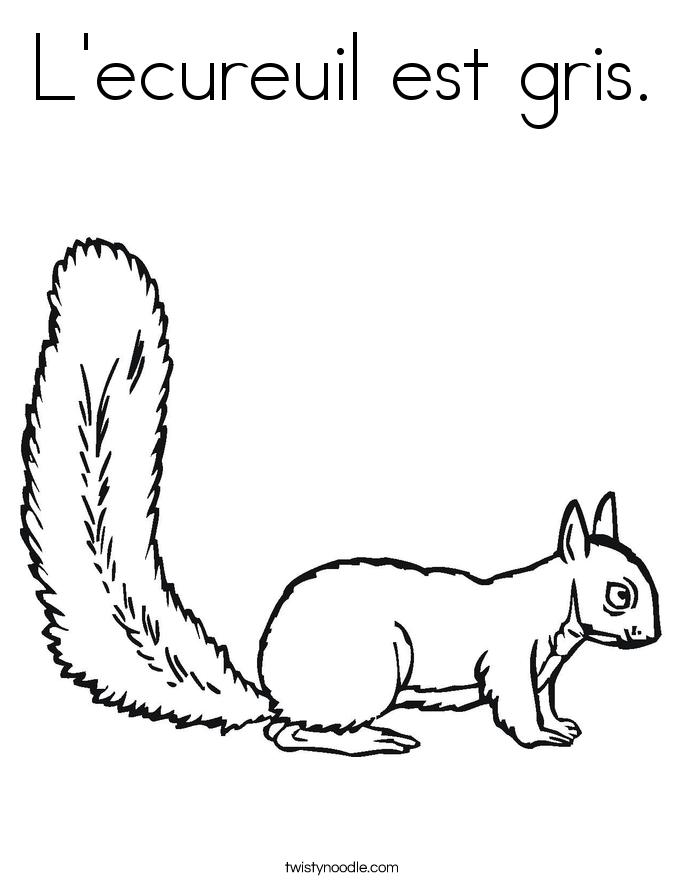 L'ecureuil est gris. Coloring Page
