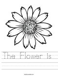The Flower is  Worksheet