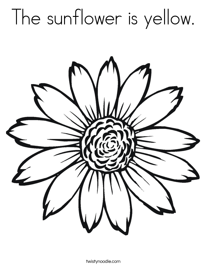 The sunflower is yellow Coloring Page Twisty Noodle