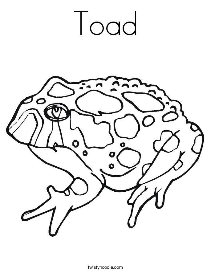toad coloring page - Coloring Pages Frogs Toads