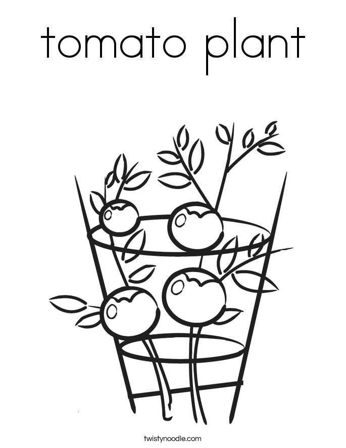Tomato plant coloring page twisty noodle for Tomato plant coloring page
