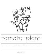 tomato plant Handwriting Sheet