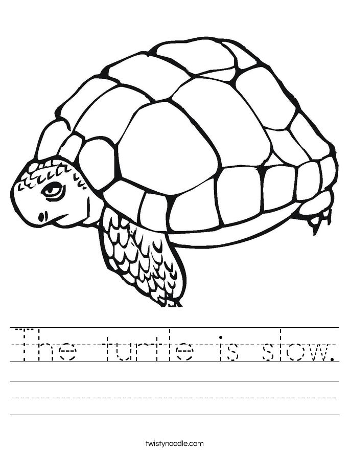 The turtle is slow. Worksheet