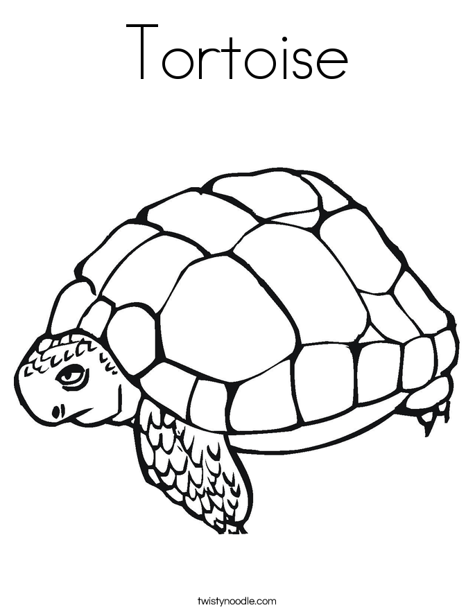 Tortoise Coloring Pages Printable Coloring Coloring Pages