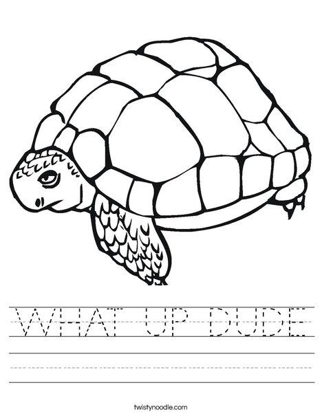 Tortoise Worksheet